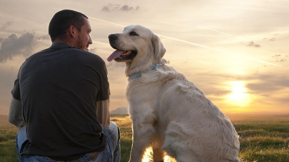 amicizia-uomo-cane